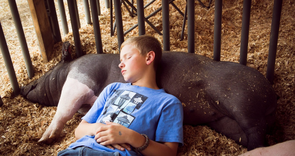 Boy with pig