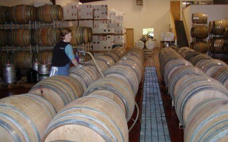 Woman filling wine barrels